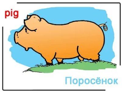 как по английски пишется свинья