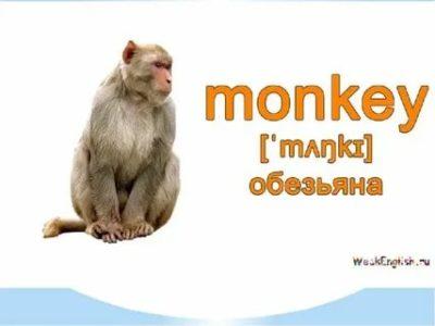 как по английски будет обезьяна