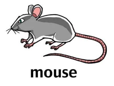 как пишется по английски мышь