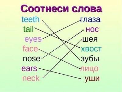 как по английски нос