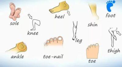 как по английски нога