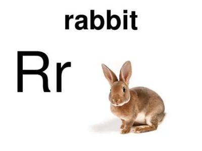 как по английски кролик