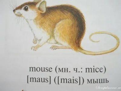 как переводится слово mouse