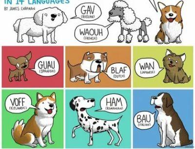 как говорят животные по английски