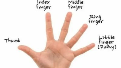 как по английски палец