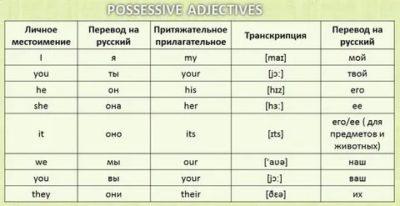 что такое притяжательные прилагательные в английском языке
