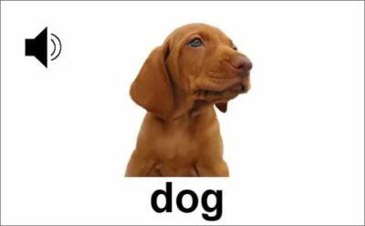 как по английски щенок