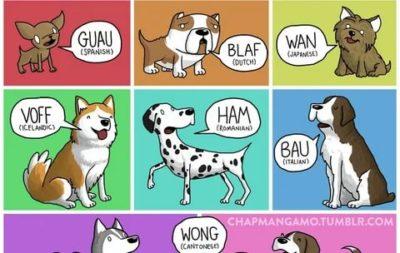 как лает собака по английски
