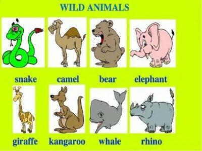 как на английском животные