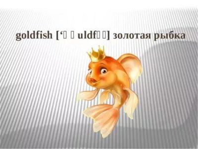 как по английски будет золотая рыбка