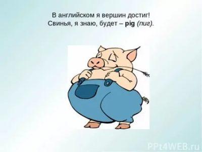 как по английски свинья
