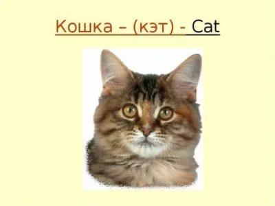 как по английски кошка