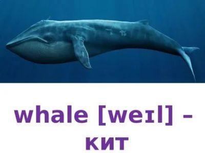 как по английски кит