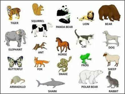 как по английски животные