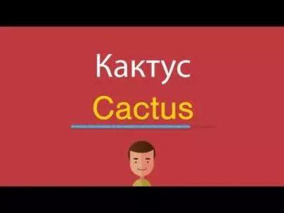 как по английски кактус