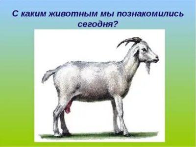 как по английски коза